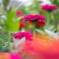 в саду :: Nika Nika