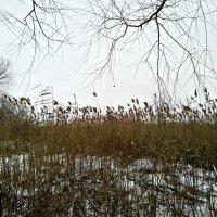 Природа зимой :: Татьяна Королёва