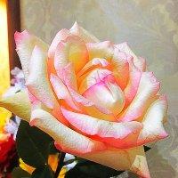 Роза :: Алла ZALLA