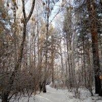 Кабы не было зимы в городах и селах, никогда б не знали мы этих дней веселых! :: Татьяна Котельникова