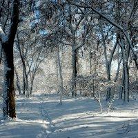 Зима :: Елена Подоляк