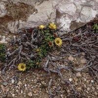 И на камнях цветут цветы :: Владимир Орлов