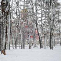 Петровский парк. Снегопад. :: Денис Масленников
