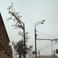 Фонарь и дерево. :: Денис Масленников