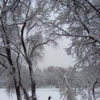Лыжник :: Виталий Купченко