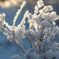 Снежный букет :: Swetlana V
