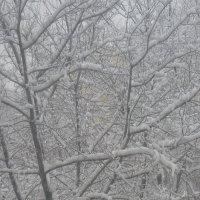 Снежная графика :: Татьяна Юрасова