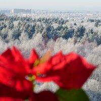 Зимний вид за стеклом ))) :: Alexey YakovLev