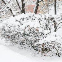 Зимняя  сказка  моего  района :: Наталья Чернушкина
