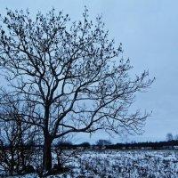 Зима :: Шура Еремеева