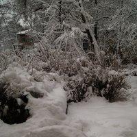 Фантазия на тему зимы. :: Олег Пучков