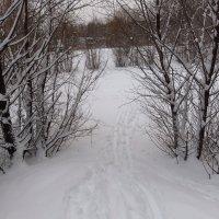 Настоящая зима пришла в последний день января :: Андрей Лукьянов