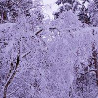 Ты прислушайся к музыке снега, душу ввысь запрокинь и замри... :: Ольга Русанова (olg-rusanowa2010)