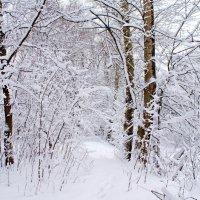 Матушка зима :: Наталья Лакомова