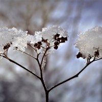 Зима-она такая!! :: Клара