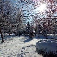Зимушка - зима :: Анастасия Фомина