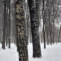 Черно-белый мир :: Денис Масленников
