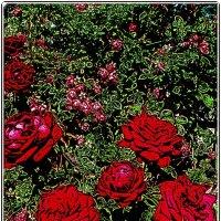 Роскошь летнего сада :: Нина Корешкова