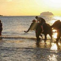 купание слонов на закате :: Dmitry i Mary S