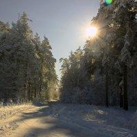 холодное солнце :: оксана