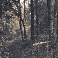 Свет в лесу :: Наталия П