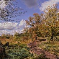 Осень в дубовой роще. :: Александр Ковальчук