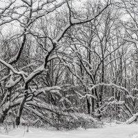 Под настом снега :: Юрий Стародубцев