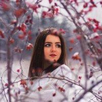Цветок зимы :: Добрый Ёж