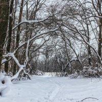 Арка в лесу :: Юрий Стародубцев