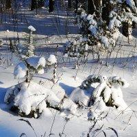 Под белым покрывалом февраля. :: Иван