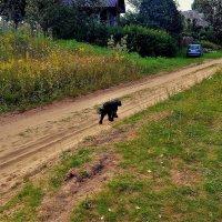 На сельской дороге... :: Sergey Gordoff