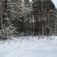 Одинокий след в лесу :: Милешкин Владимир Алексеевич