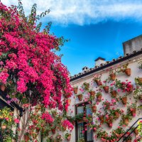 Кордова - цветущий рай! :: Марина Ножко