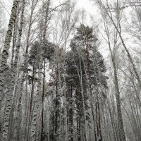 Зима шагает ... :: Татьяна Котельникова