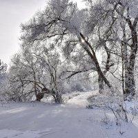 Зима. :: Валера39 Василевский.