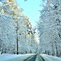 Зимняя дорога. :: Михаил Столяров