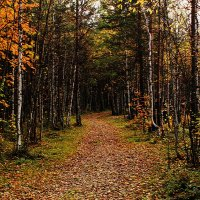 золотая осень :: Светлана Павловская