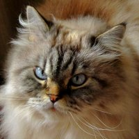 Мой кот :: Сергей Карачин