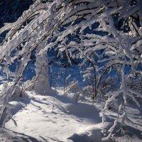 Кусочек зимы :: Илья Шипилов