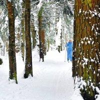 Сосны, лыжи, снег - всё в удовольствие! :: Татьяна Помогалова