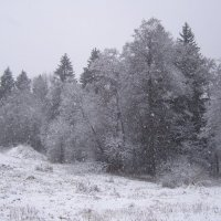 Снегопад :: Анна Воробьева