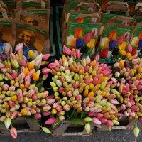 Цветочный рынок. Амстердам :: Алёна Савина