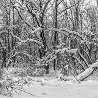 Во власти снега.. :: Юрий Стародубцев