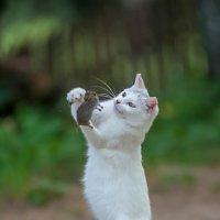 Кошки мышки :: Александр Шарапов