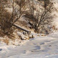 Берег реки Онега.Россия :: Марина Никулина