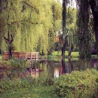 Осень бывает разной :: Марина Маркевич