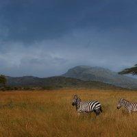Будни саванны...Танзания! :: Александр Вивчарик
