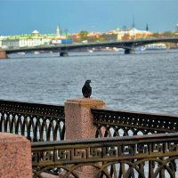 Голубок на набережной Лейтенанта Шмидта... :: Sergey Gordoff