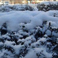 Такой пушистый снег... :: Нина Корешкова