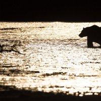 Рыбалка на закате :: Денис Будьков